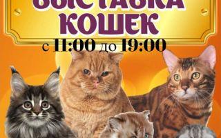 Только один день! Выставка кошек!
